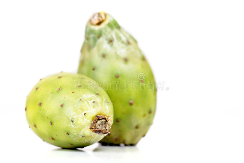 Opuntia ficus indica. On white background stock images