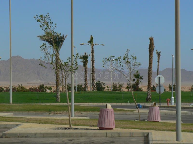 Opustoszały miastowy krajobraz z drzewkami palmowymi zdjęcia royalty free