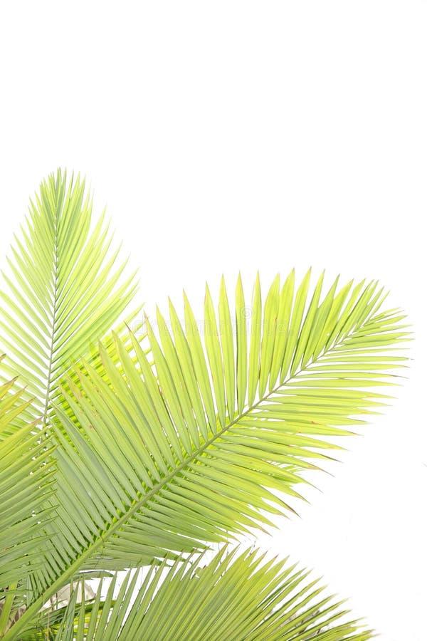 opuszczać drzewka palmowego fotografia stock