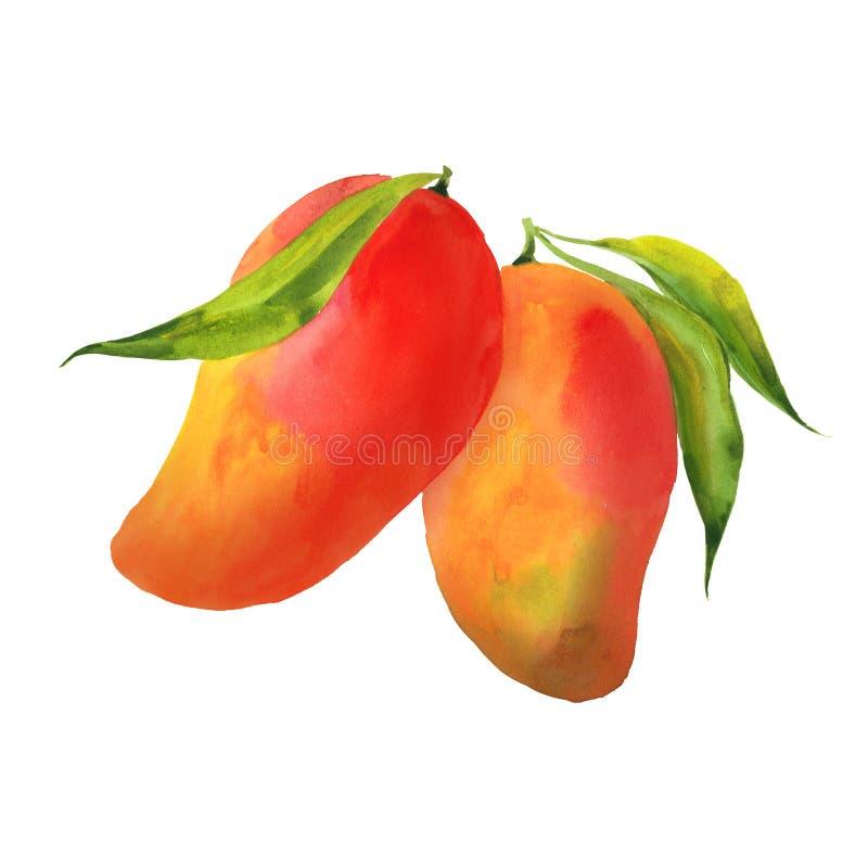 opuszczać mango ilustracja wektor