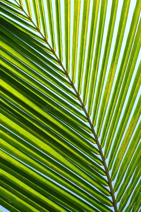 opuszczać palmy obraz stock