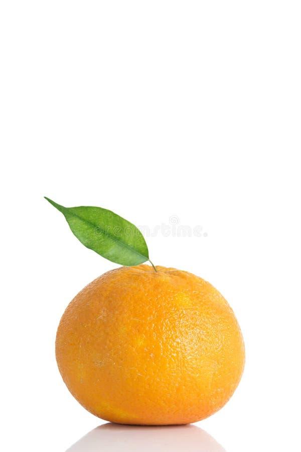 opuszczać pomarańcze dojrzały obrazy royalty free
