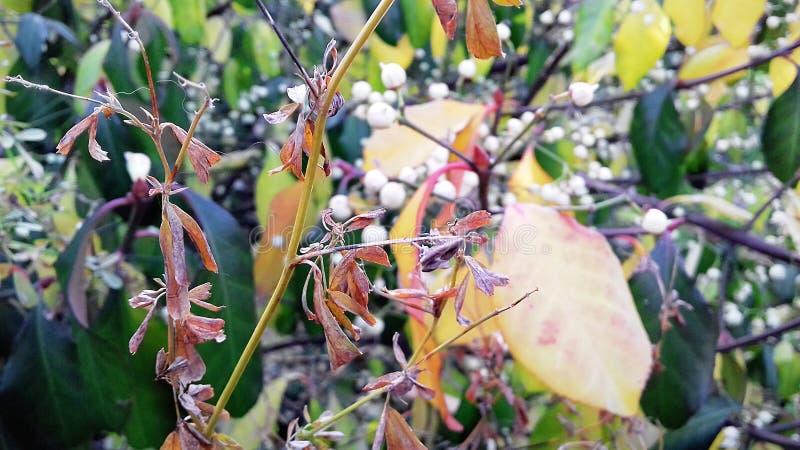 opuszczać utumn Początek wczesna jesień Piękno natura w swój kolorach zdjęcia royalty free