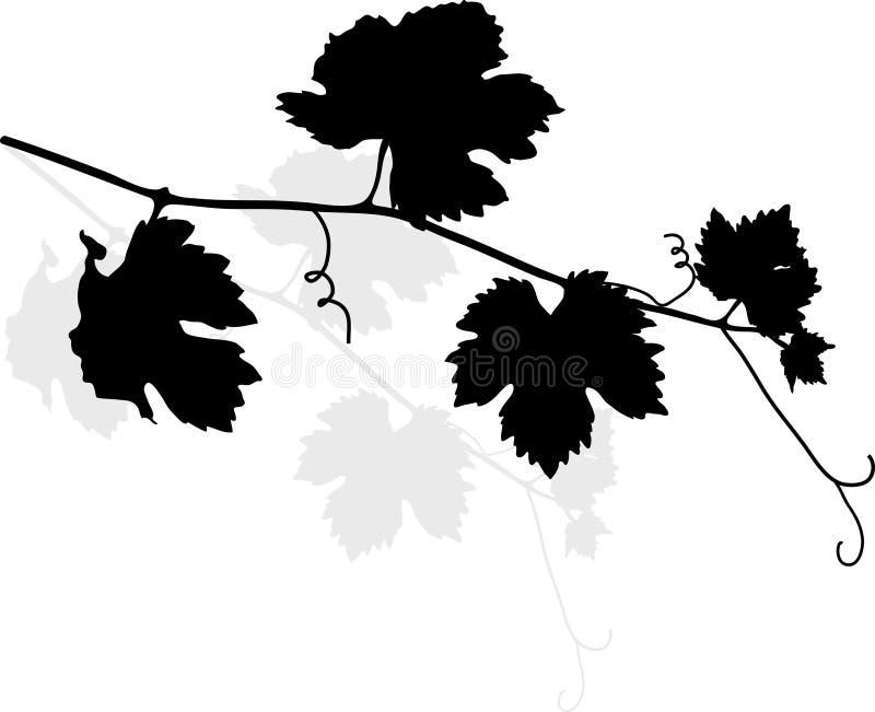 opuszczać winogradu ilustracja wektor