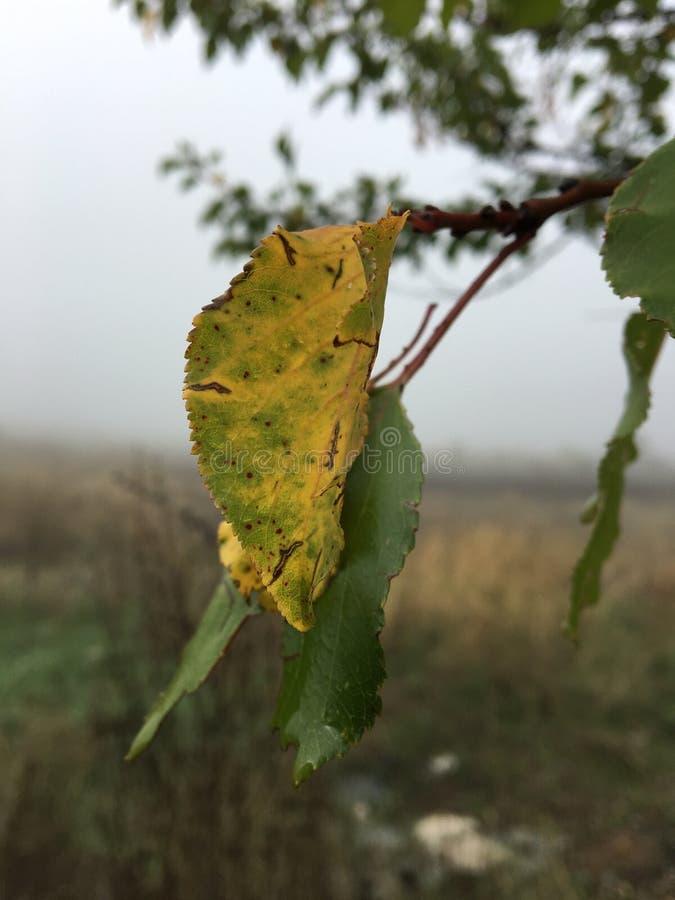 Opuszcza jesieni natury nieba zieleń zdjęcia royalty free