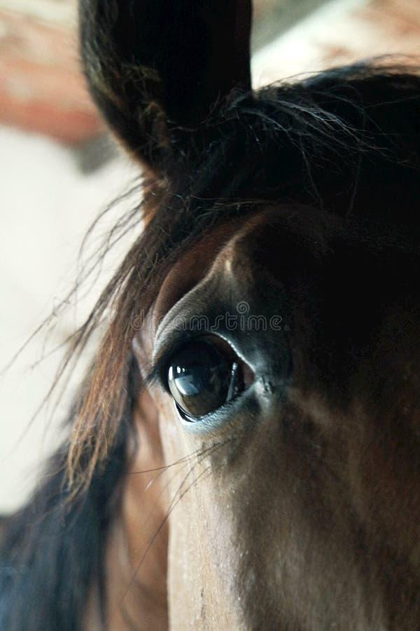 Opvallend een paard stock afbeeldingen