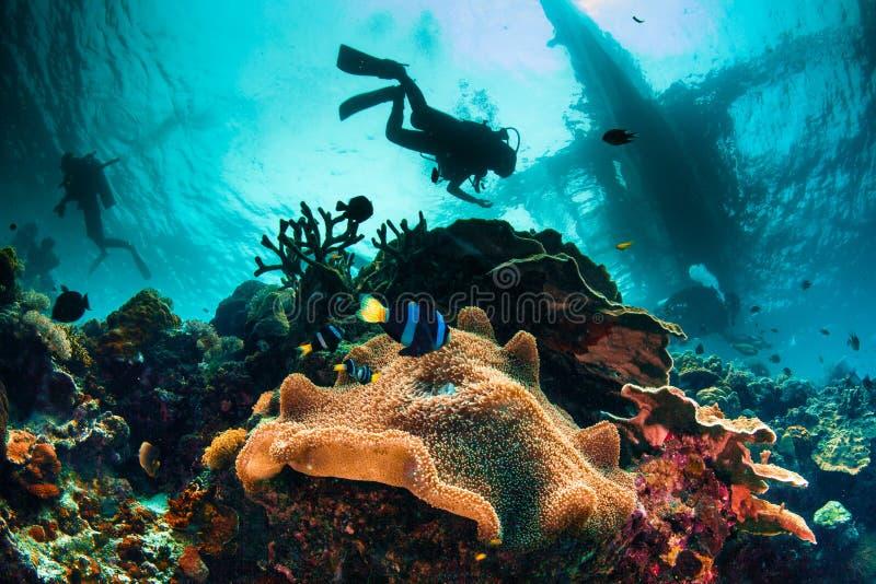 Opwindende en bezige onderwateroverzees scape royalty-vrije stock afbeelding