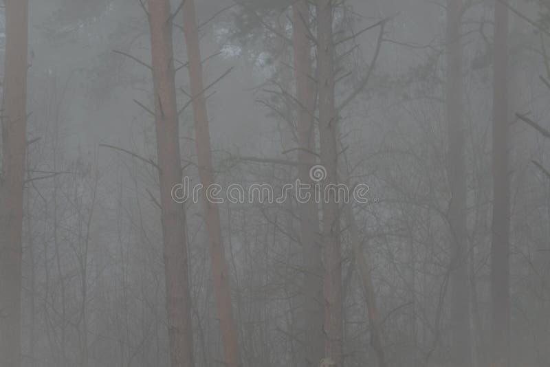 Opzettelijk onduidelijk beeld van pijnbomen in ochtendmist royalty-vrije stock afbeelding