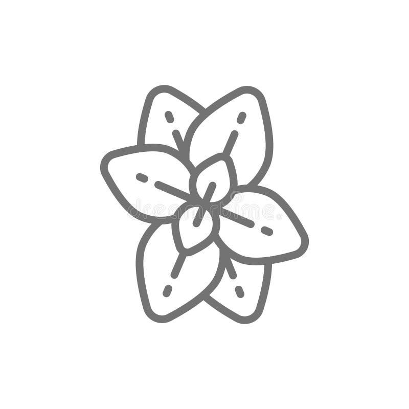 Orégano, menta, línea icono de la albahaca libre illustration