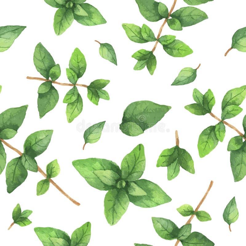 Oréganos tirados da erva do teste padrão do vetor da aquarela mão sem emenda ilustração do vetor
