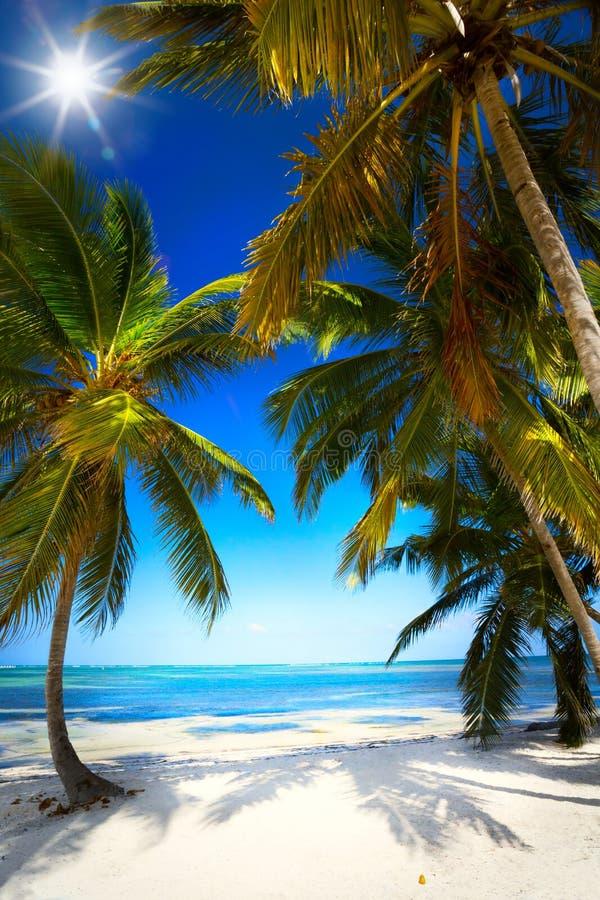 Orörd tropisk strand för konstsommar royaltyfri foto