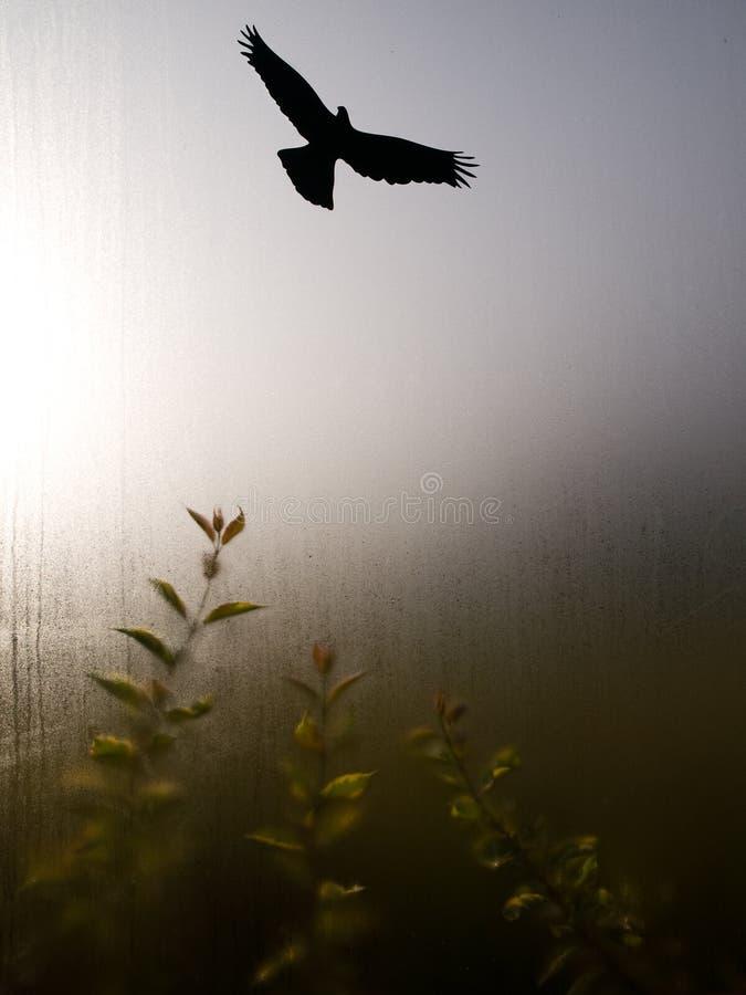 orła cień obrazy stock