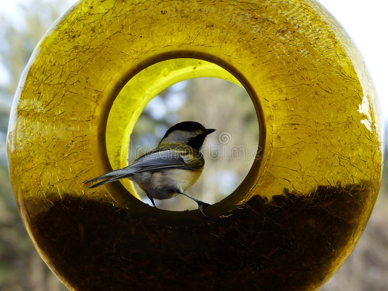 Ora di pranzo dell'uccello immagini stock libere da diritti