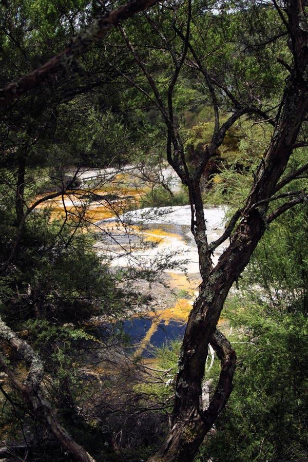 Orakei Korako暗藏的地热谷-鲜绿色大阳台:看法通过在五颜六色的彩虹多孔状淀土大阳台的树 免版税库存照片