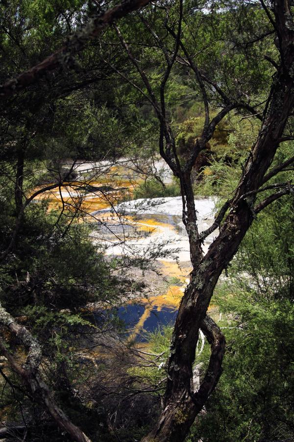 Orakei Korako hidden geothermal valley - Emerald terrace: View through trees on colorful rainbow sinter terrace. Covered with yellow and white microbial mats royalty free stock photo