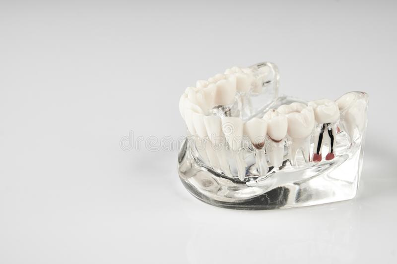 Oral healthcare, education concept royalty free stock images