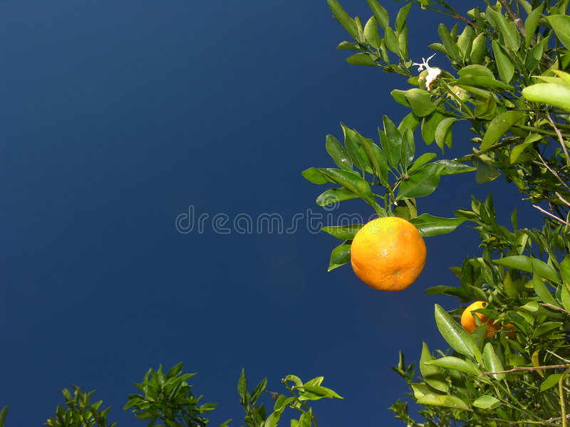 Orange Stock Photography
