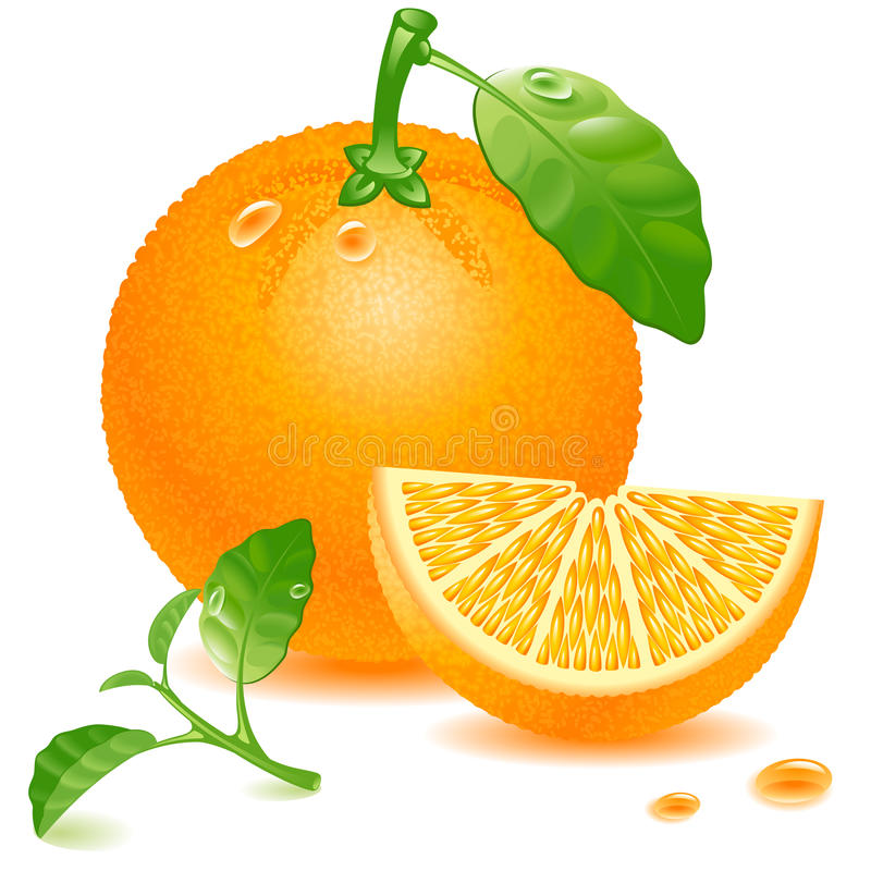 Free Orange Royalty Free Stock Photo - 20723645