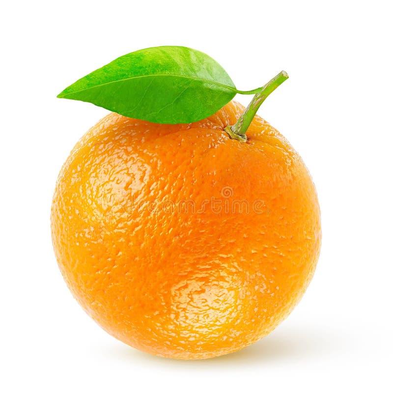 Free Orange Stock Images - 42424404