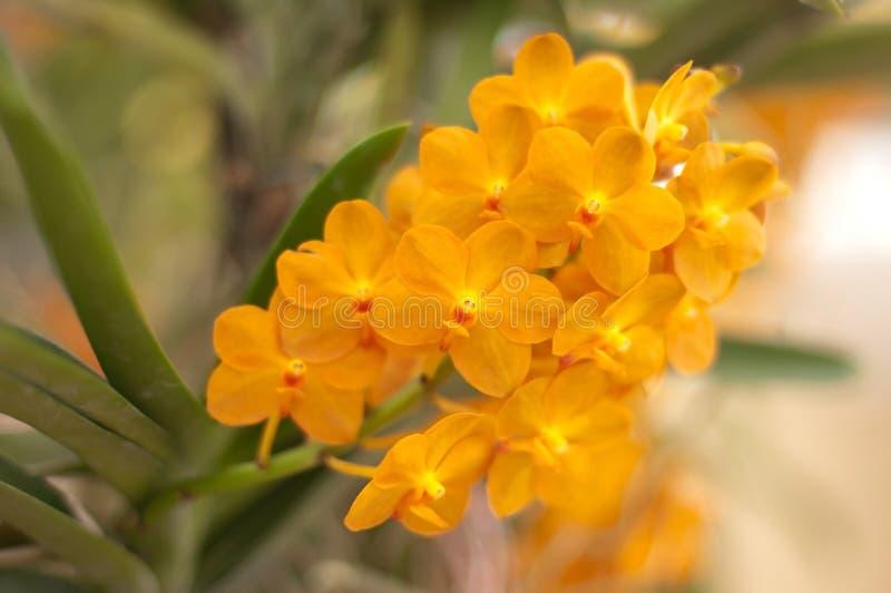 orange ' zdjęcia royalty free