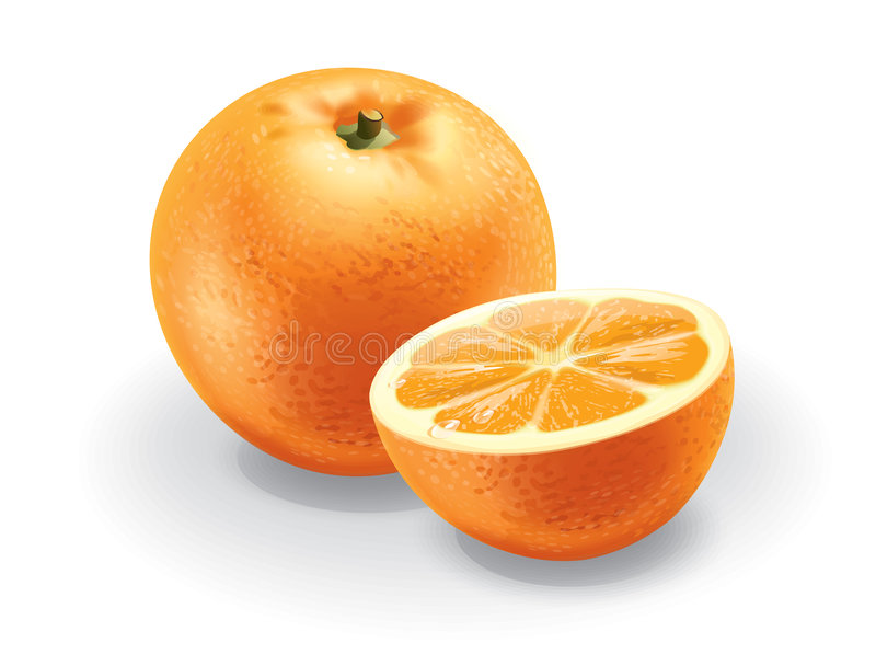 orange royaltyfri illustrationer