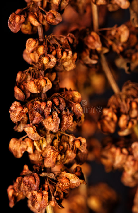 Orange Abstract Plant Royalty Free Stock Photography