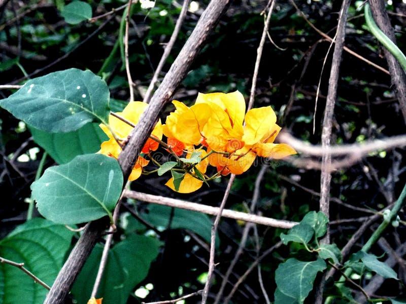 Orange against nature stock photo