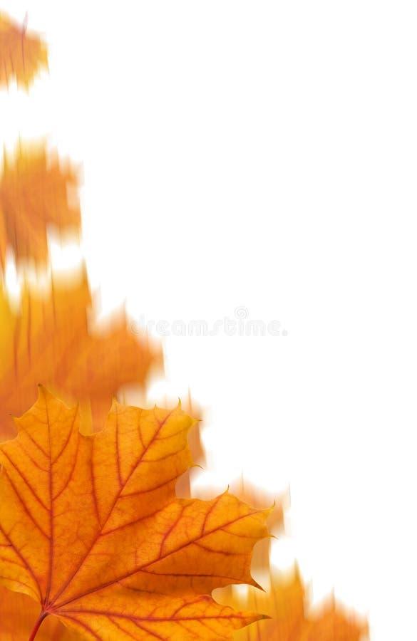 Orange Ahornblattcollage stockfotografie