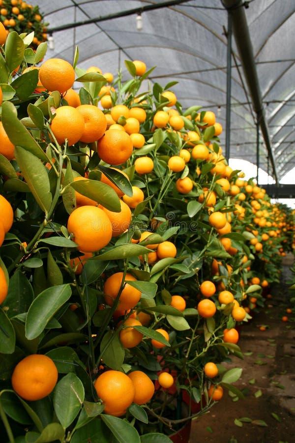 Orange Anlage lizenzfreie stockfotografie