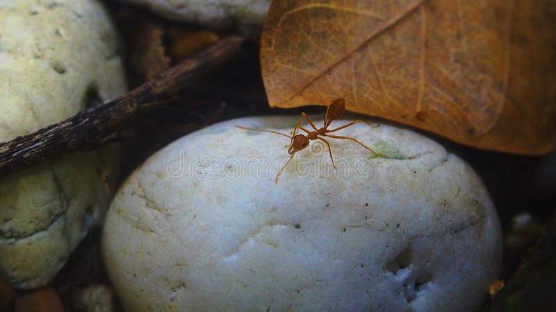 Orange ants on a white stone in the garden royalty free illustration