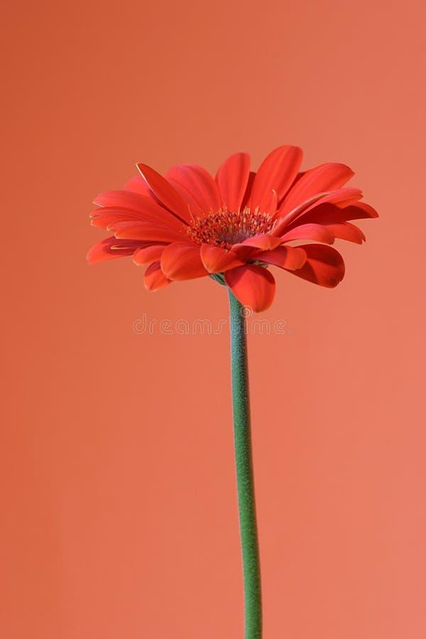 Orange auf Orange lizenzfreie stockbilder
