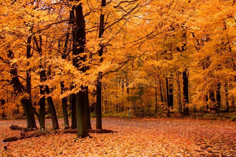 Orange autumn stock photos