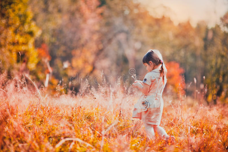 Orange autumn day. Adorable curly baby girl walking in high grass in autumn park royalty free stock photo