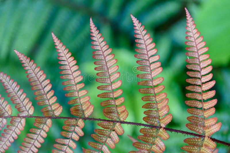 Orange, Autumn Ferns, and green ferns as a nature background royalty free stock photos