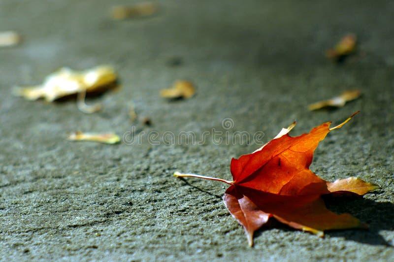 Orange autumn leaf royalty free stock photo