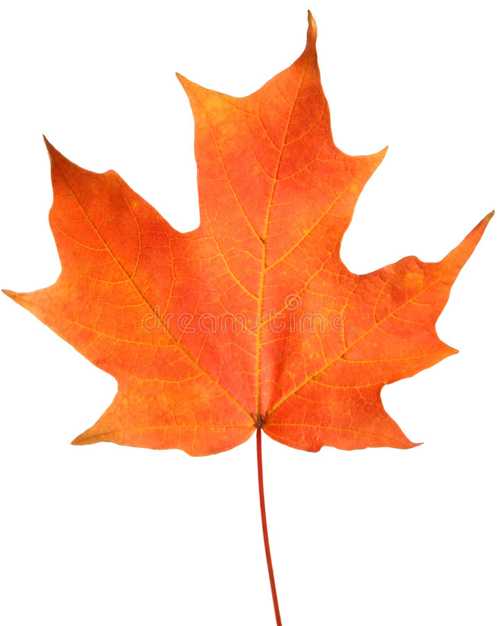 Free Orange Autumn Leaf Stock Photos - 6804873