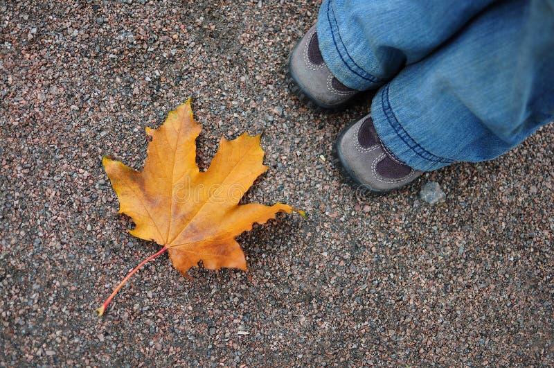 Orange autumn leaf on the gravel road royalty free stock photo