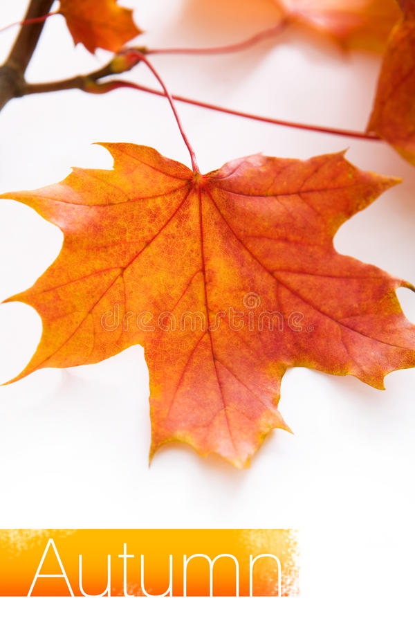 Download Orange autumn leaves stock image. Image of color, environment - 11450067