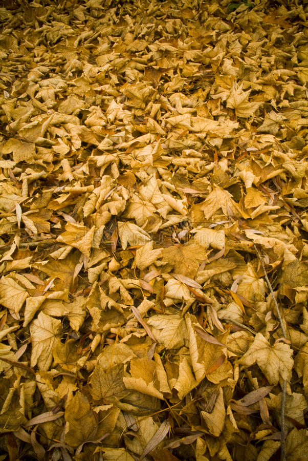 Orange Autumn Leaves. Leaves blanket the ground in fall / autumn royalty free stock photography
