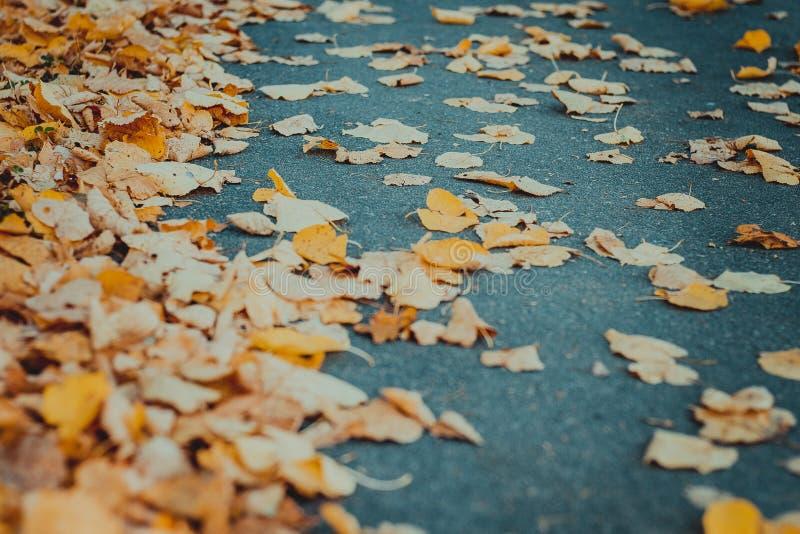 Orange autumn leaves on asphalt royalty free stock photo