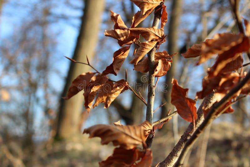 Orange Autumn Leaves in einem Wald stockfotos