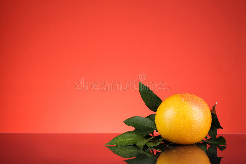 Orange avec le fond rouge photo libre de droits