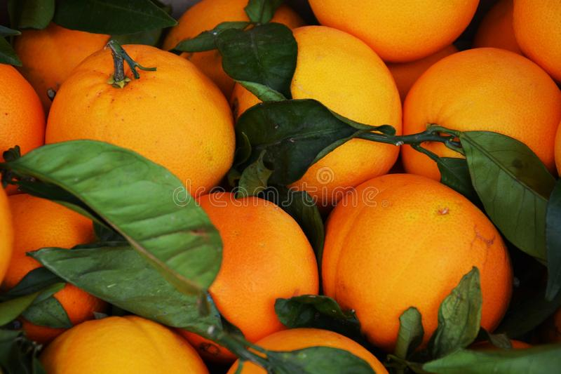 Orange background royalty free stock image