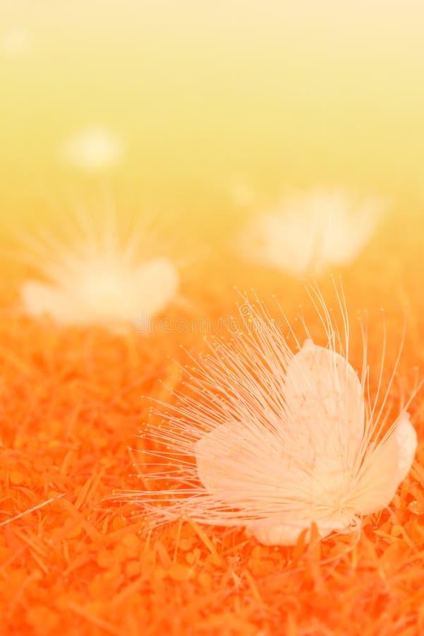 Orange bakgrund för blomma för träd för signalfiskgift arkivbild