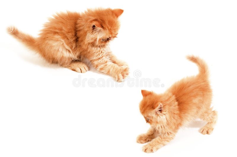 Orange ball. Two playful orange Himalayan kittens royalty free stock photos