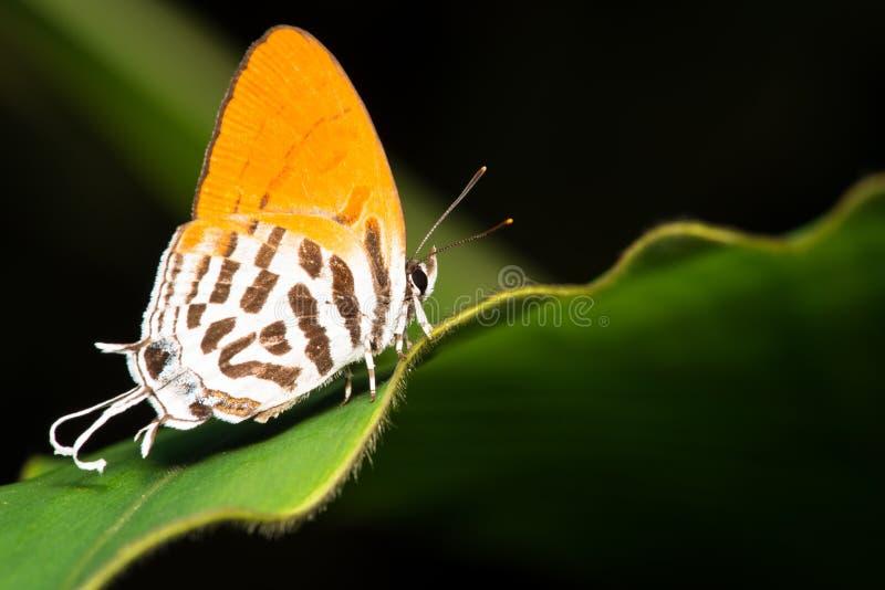 Orange Basisrecheneinheit stockfotos