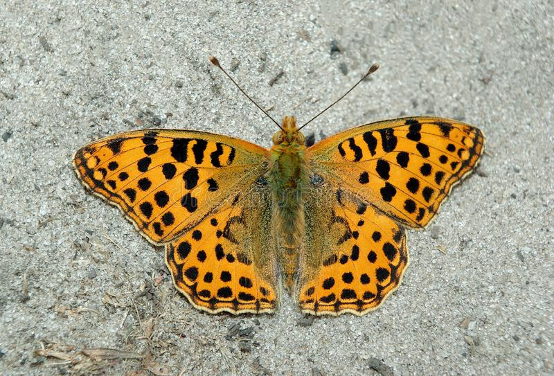 Orange beautiful butterfly sitting on the sand. royalty free stock image