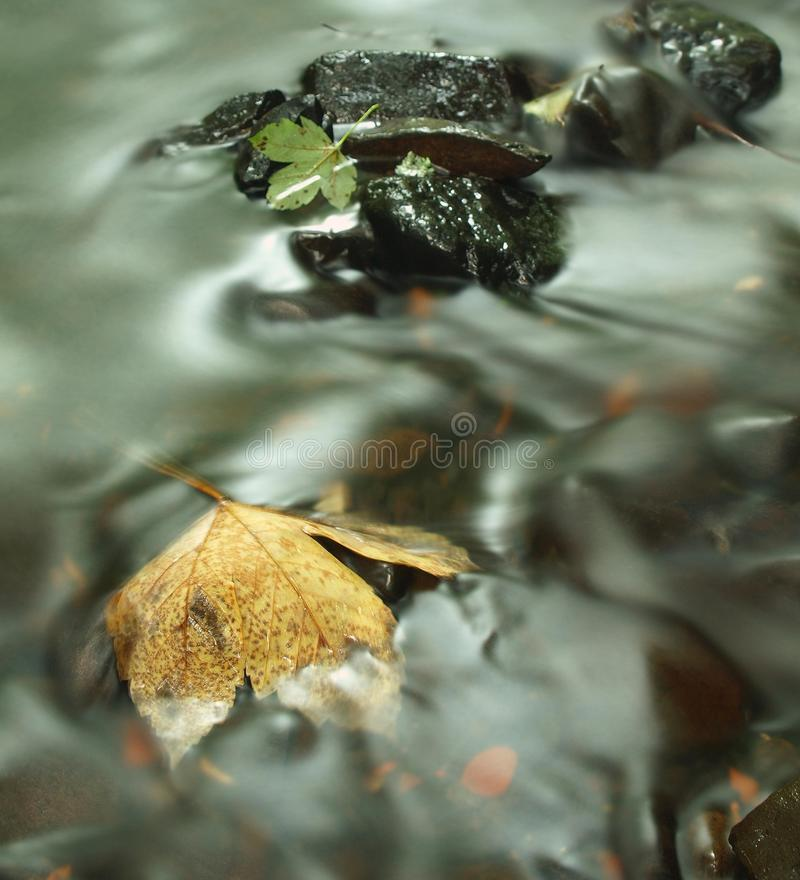 Orange beech leaves on mossy stone below increased water level. royalty free stock photos