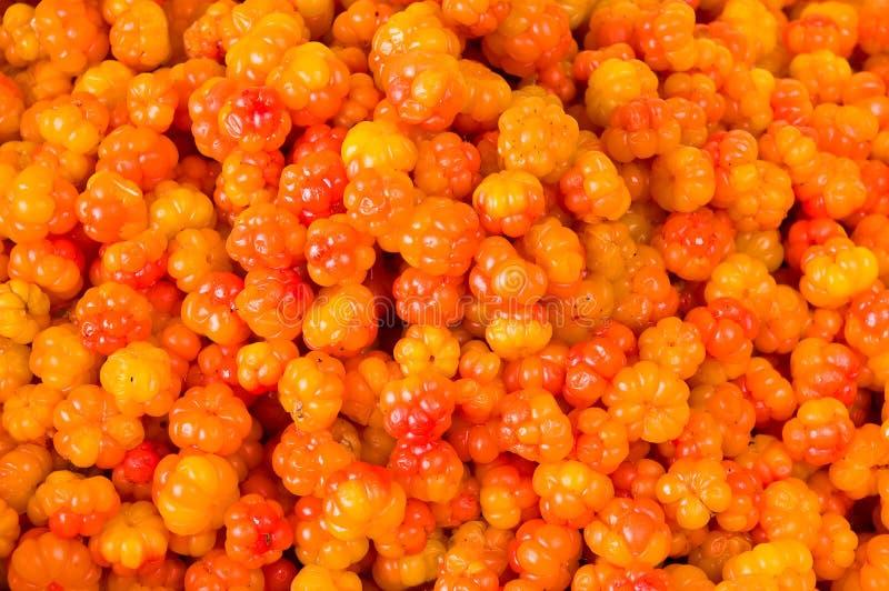 Orange Beeren stockbilder