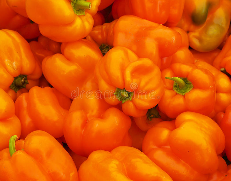 Orange Bell Peppers stock photography